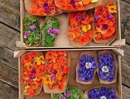 Zelf eetbare bloemen plukken